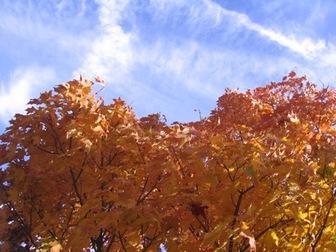 Leaf_peeping_photo_1