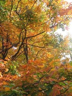 Leaf_peeping_photo_2