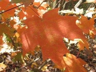 Leaf_peping_photo_3
