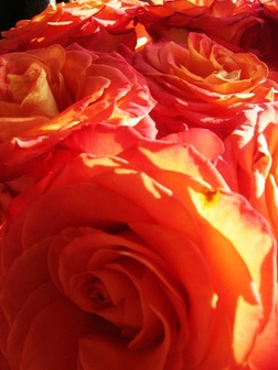 Three_dollar_flowers_2