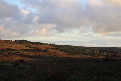 NF Pine Landscape