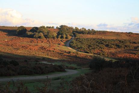 NF Road Landscape