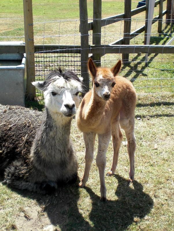 Pandora and Mum